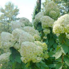 Best Plants for Mississippi Landscapes