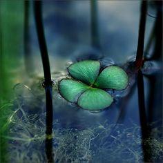 photographies de sophie thouvenin - luck - apesanteur4