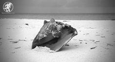 "Fifty Shades of Gray: The Caribbean. Photo taken in the Exumas, Bahamas. To see the rest of the ""Fifty Shades of Gray"" photo series click the image. Cheers! #Travel #Caribbean #Bahamas"