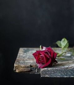 a single red rose /Ana Rosa Beautiful Red Roses, Beautiful Flowers Wallpapers, Pretty Flowers, Rose Photography, Still Life Photography, Flower Wallpaper, Wallpaper Backgrounds, Single Red Rose, Book Flowers