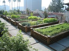 Mission Inn fabulous rooftop herb garden, Riverside CA