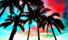 'Waikiki Skyscape' by Benjamin Padgett Palm Tree Sunset, Palm Trees, Beautiful Sky, Beautiful Places, Kitsch, Scenic Photography, Island Girl, Life Goes On, Summer Of Love