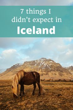Iceland is surprising in oh-so-many ways! #Iceland #IcelandTravel #Reykjavik