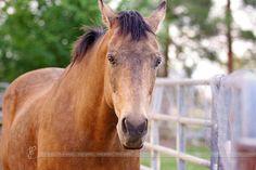 Rustic Wedding Venues, Outdoor Weddings, Indian Springs, Nevada, Barn, Horses, Converted Barn, Barns, Horse