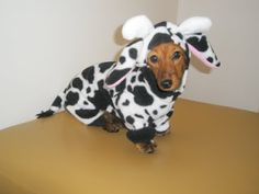 Image result for dachshund cow costumes