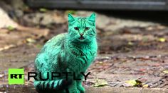Mysterious green cat spooks Bulgarians in Varna...i didnt listen to this video but still...