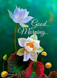 Get a list of good morning flower images to send to your friends and family to make their morning good and Peaceful with great quotes on the flower images. Good Morning Flowers Quotes, Good Morning Nature, Good Morning Beautiful Images, Good Morning Roses, Good Morning Images Hd, Good Morning Gif, Happy Morning, Good Morning Messages, Good Morning Greetings