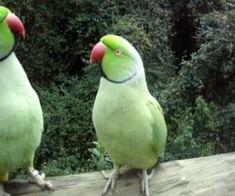 Funny Birds, Cute Birds, Pretty Birds, Beautiful Birds, Funny Animals, Cute Animals, Funny Pets, Tropical Birds, Exotic Birds
