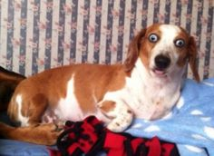 19 Derpy Dog Moments That'll Have You Laughing In No Time