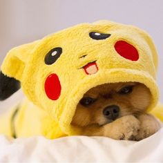 Dog costume as Pikachu   http://ift.tt/2bFubwu via /r/dogpictures http://ift.tt/2bYp7QA  #lovabledogsaroundtheworld