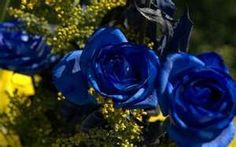 Blue knockout roses... sweet I want a blue one