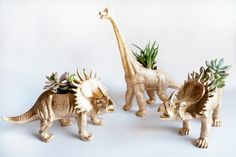 It is the time for giving but buying lots of gifts can mean spending lots of money so I love a budget friendly DIY that looks like a million bucks. This year I was looking for a cute gift for my so… Succulent Centerpieces, Diy Centerpieces, Quinceanera Centerpieces, Dinosaur Plant, Dinosaur Dinosaur, Colorful Succulents, Diy Inspiration, Shower Inspiration, Super Cute Animals