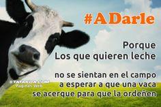#ADarle Animals, Personal Finance, Animales, Animaux, Animal, Animais