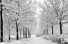 Inverno entre as árvores.  http://www.mostbeautifulthings.net/winter-scenes/