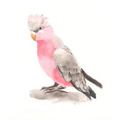 Items similar to Galah Painting -bird art -wildlife art print of watercolor painting 5 by 7 print on Etsy Birds Painting, Art Prints, Animal Art, Wildlife Art, Painting, Illustration Art, Original Watercolor Painting, Watercolor Bird, Bird Art