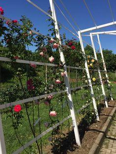 Outdoor & Garden Design Structure for a rose garden