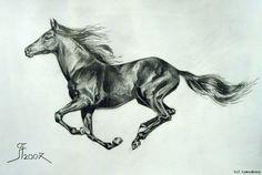 Pferd Zeichnung Bleistift