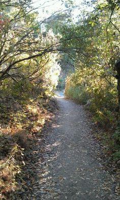 Los Trancos woods, Portola Valley