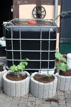 Covered IBC tank with container garden