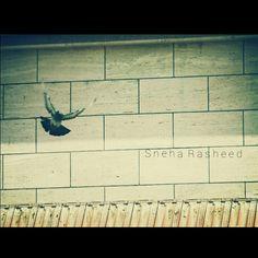 #coz#these#birds#beauty#love