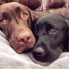 """""""We are autism service dogs for two boys. We bring them comfort and support whether we are at home or traveling around on one of our many adventures"""" ~ Caspian and Sydney - @caspiantheautismservicedog"""