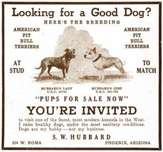 American Pit Bull Terrier Puppies - 2017 Calendar ...  |American Pit Bull Terrier Vintage