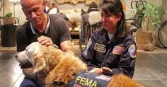 Last Known Living 9/11 Search-And-Rescue Dog Returns To NYC To Be Honored | FamilyPet