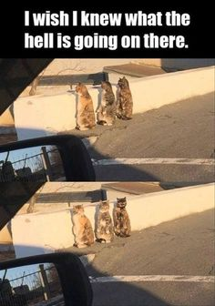 - your daily dose of funny cats - cute kittens - pet memes - pets in clothes - kitty breeds - sweet animal pictures - perfect photos for cat moms Funny Animal Jokes, Funny Animal Pictures, Cute Funny Animals, Stupid Funny Memes, Animal Memes, Funny Cute, Funny Stuff, Funny Fails, Animal Quotes