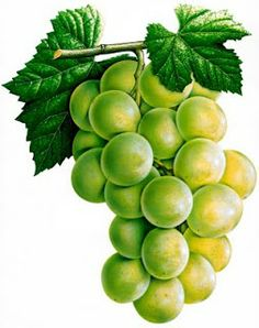This high quality free PNG image without any background is about grape, berry, grapes, fruit, green grapes and food.