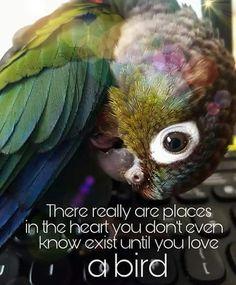 Cute Birds, Pretty Birds, Beautiful Birds, Parrot Quotes, Bird Quotes, Parrot Tattoo, Funny Parrots, Conure, Tropical Birds