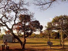 A2 - Apesar de seca e retorcida, a paisagem do parque lhe confere uma beleza própria.