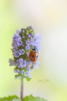 Lady on Lilac by Jacky Parker - Photo 128541683 - 500px