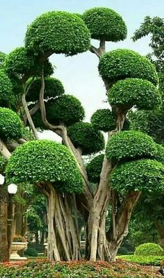 Photo Cool Plants, Tree Trunks, Trees To Plant, Flora, Most Beautiful, Vegetables, Nature Animals, Landscape, Wishes Images
