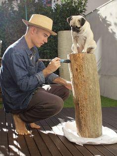 Pugs like to help
