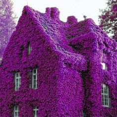 luxury cars - Perfume Rainbow Climbing Plants Coulourful Rock Cress Flower Seeds Alexnld com Purple Love, All Things Purple, Shades Of Purple, Purple Stuff, Purple Flowers, Cascading Flowers, Flowers Nature, Dark Purple, Garden Seeds