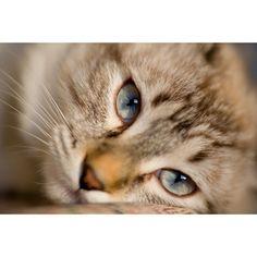 #cat #kitten #pussy #cute
