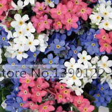 50 / bag flores raras olvidar me no semillas MYOSOTIS ALPESTRIS color mezclado semillas de flores para el hogar jardín decoración(China (Mainland))