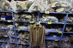 Una chaqueta de leopardo en los estantes llenos de cabezas de león que fueron traficadas de forma ilegal y otras partes de animales almacenados en el Depósito Nacional de Fauna Salvaje del Servicio de Pesca y Vida Salvaje de Estados Unidos, en Commerce City, Colorado. (AP )