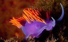 Most Beautiful Unseen Sea Creatures Seen   On www.dil-ki-dunya.tk