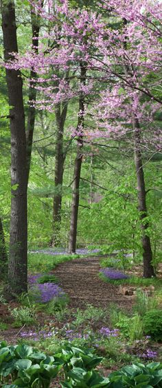 Bell's Woodland at Chanticleer Garden in Wayne, Pennsylvania by Chanticleer