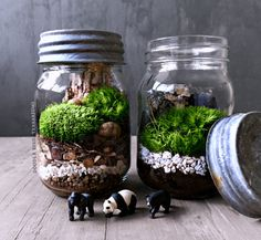 Layers of earth and stone followed by a carpet of fresh moss and mini mountain landscape are housed within a glass mason jar. Authentic antique lids are made of zinc. Comes as a completed piece (no assembly required) with everything you need to care for this mini terrain under glass. Each terrarium will vary slightly from the next and be a delightfully unique landscape.  Features: • One (1) glass mason jar (pint size) measuring 6 high • Miniature black bear, panda, or gorilla figurine…