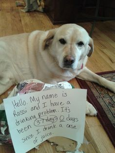 Dog Shaming Pictures
