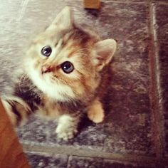 """Hils på vårt lille nye familiemedlem, Sussie #søteste #cutiepie #kitten #kattunge #smelt"" Photo taken by @itinaa on Instagram, pinned via the InstaPin iOS App! http://www.instapinapp.com (06/30/2015)"