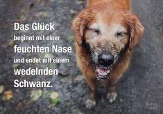 """""""Das Glück beginnt mit einer feuchten Nase und endet mit einem wedelnden Schwanz."""" #quotes #zitate #hunde #buddyandbello #buddybello #doglove #hundeliebe #hundezitate #hundesprüche"""