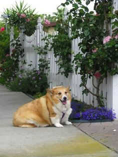 I've found it, the best pin on pinterest.  25 animals that are too fat to function.