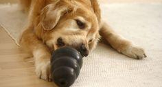Findet einfache, günstige Hundespiel Ideen in unserem Hunde Blog! Denn nur ein ausgeglichener Hund ist ein glücklicher!