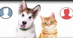 one - Test with your name Poping Pimples, Your Name, Husky, Names, Dogs, Animals, Animales, Animaux, Pet Dogs