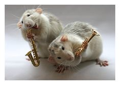 The Rat Pack, Adorable Photos of Rats With Miniature Instruments