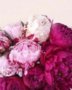 Pretty Peonies flowers floral Pink See more at www.HerFashionedLife.com #beautifulflowersromantic