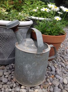 Vintage watering can, www.purplepottingshed.com